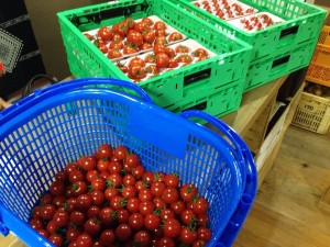 本日のトマト
